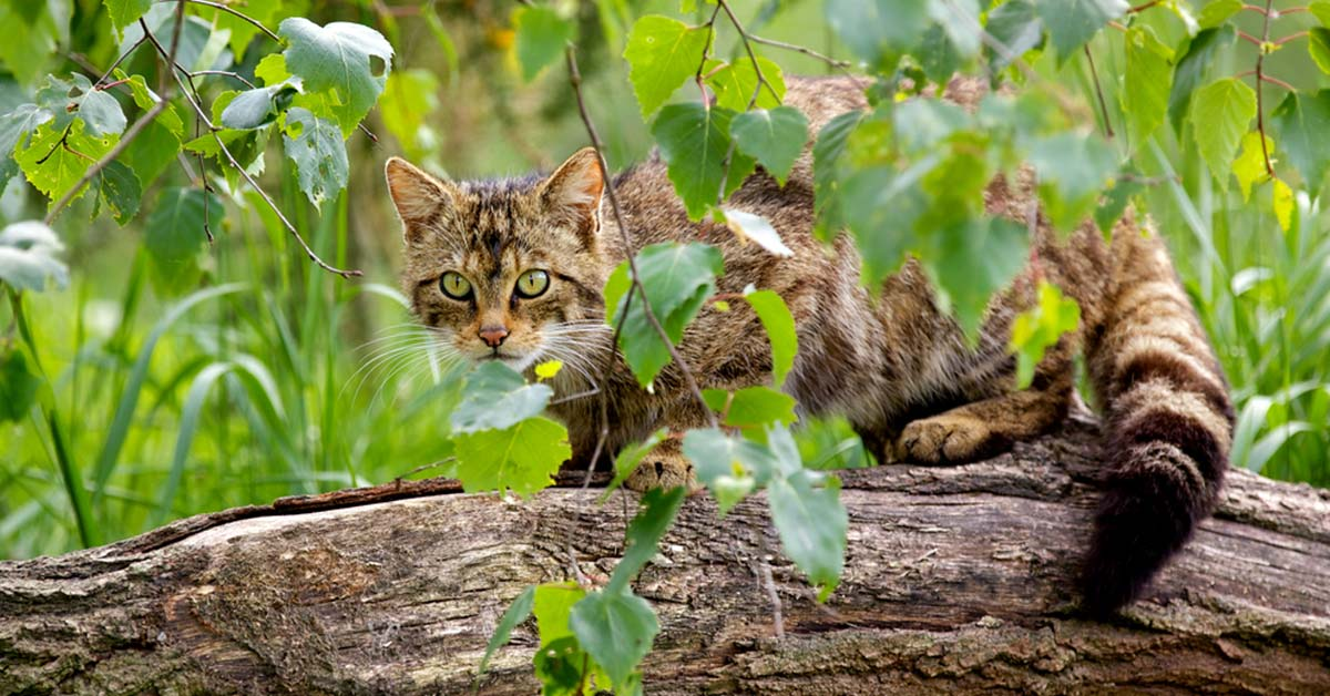 Stray animals are prevalent sources for human toxoplasmosis