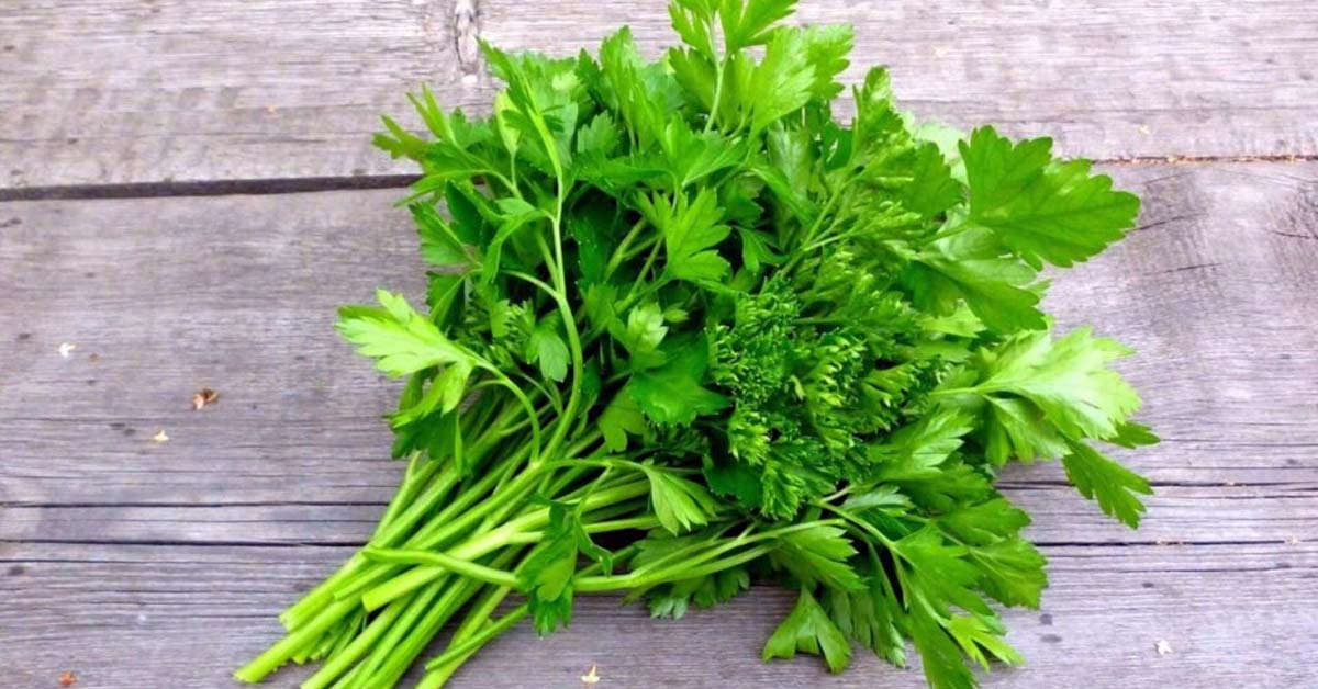 Protective Role of Parsley against Oxygen Driven Disorders