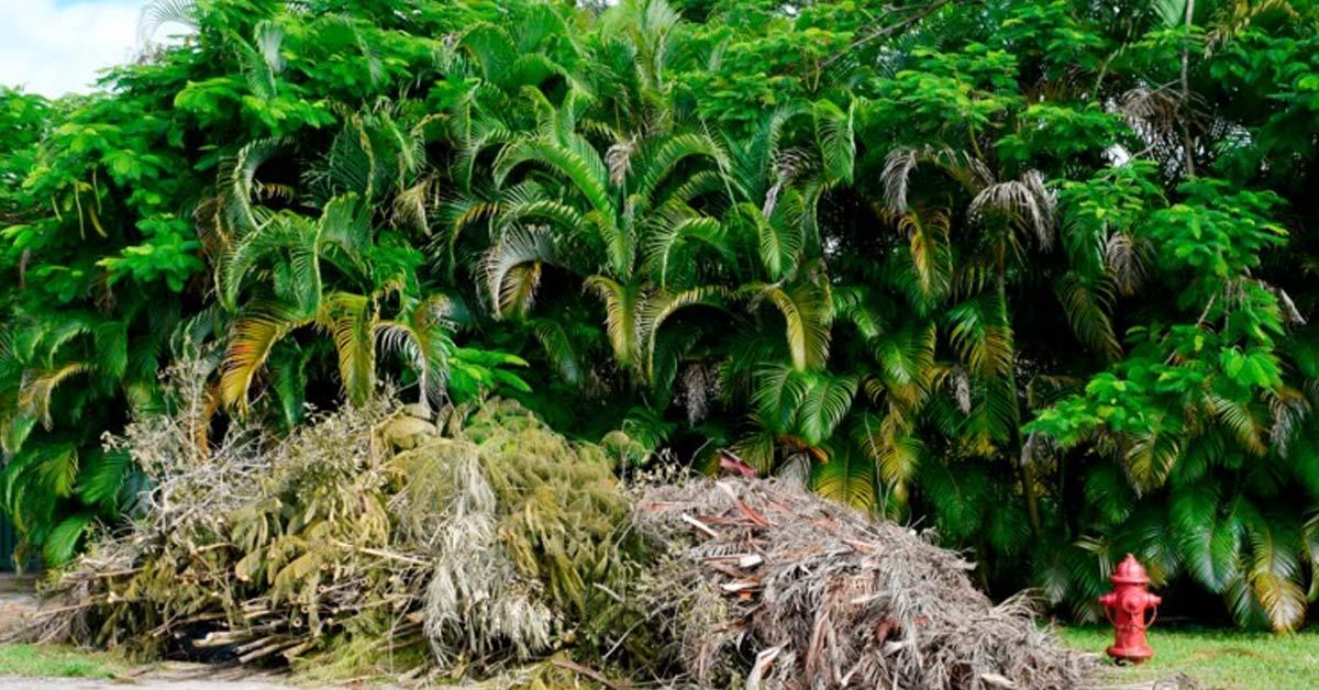 Optimizing Paramount Palm Leaf Processing Methods
