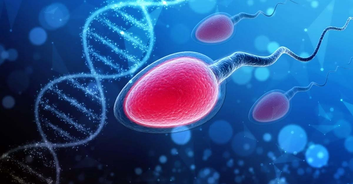 Effects of Altitude on Male Fertility Hormones